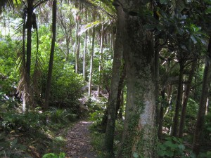 Rainforest, Coromandel, North Island, New Zealand