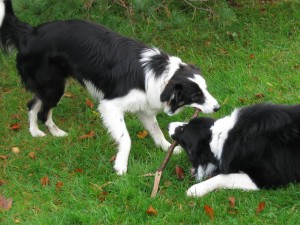 Cori and Fergus, the youth hostel dogs