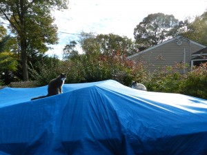 Last weeks cat update; The boat standoff